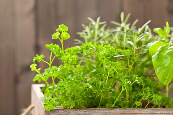 Living herb centerpiece for giveaways