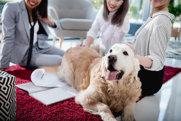Event attendees relax at a therapy dog session